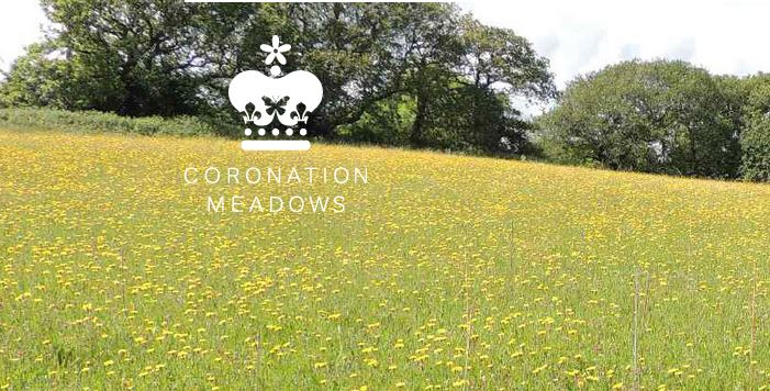 Prince Charles Coronation Meadows